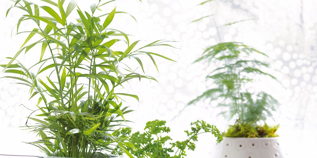 Las 10 plantas de interior m s resistentes for Plantas de interior lidl