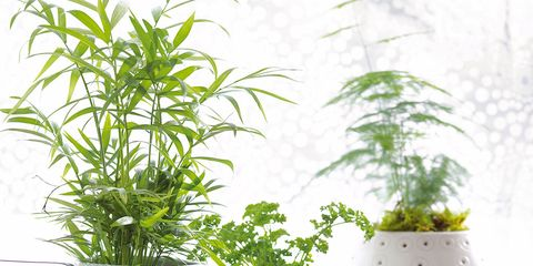 Las 10 Plantas De Interior Mas Resistentes - Plantas-de-interior-resistentes