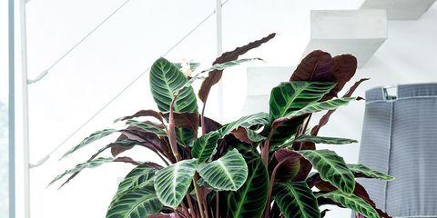 Flowerpot, Leaf, Room, Interior design, Interior design, Terrestrial plant, Houseplant, Flowering plant, Vase, Artifact,