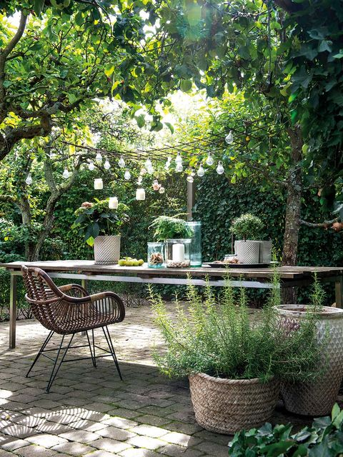Backyard, Garden, Furniture, Yard, Patio, Tree, Botany, Landscaping, Table, Landscape,