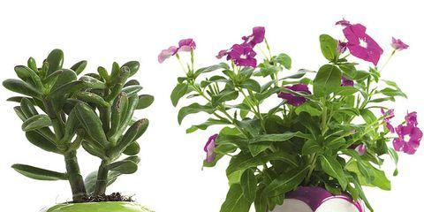 Purple, Flower, Pink, Toy, Petal, Violet, Magenta, Flowerpot, Flowering plant, Lavender,