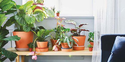 banco de madera con plantas de interior macetas ingefära, de ikea