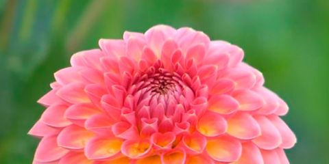 12 Plantas De Sol Para El Verano - Plantas-de-jardin-resistentes
