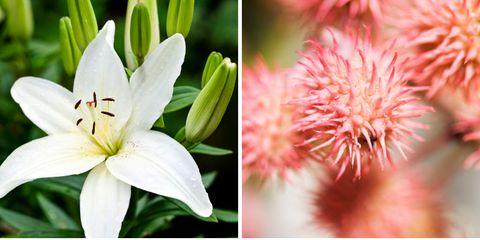 Flower, Flowering plant, Plant, Petal, Lily, Terrestrial plant, Adaptation, Wildflower, Lily family, Amaryllis belladonna,