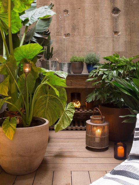 Flowerpot, Houseplant, Green, Leaf, Plant, Botany, Flower, Herb, Room, Garden,