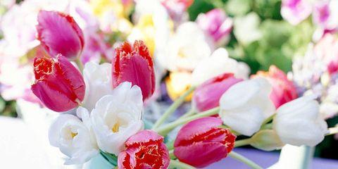 Petal, Flower, Pink, Cut flowers, Flowering plant, Bouquet, Artifact, Flower Arranging, Vase, Serveware,