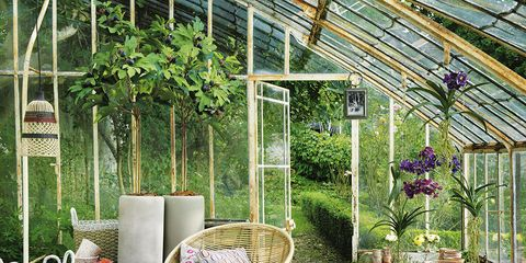 Furniture, Purple, Outdoor furniture, Garden, Lavender, Greenhouse, Backyard, Outdoor table, Wicker, Design,