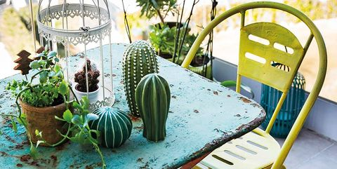 Cactus, Table, Houseplant, Chair, Furniture, Plant, Iron, Flowerpot, Coffee table, Grass family,