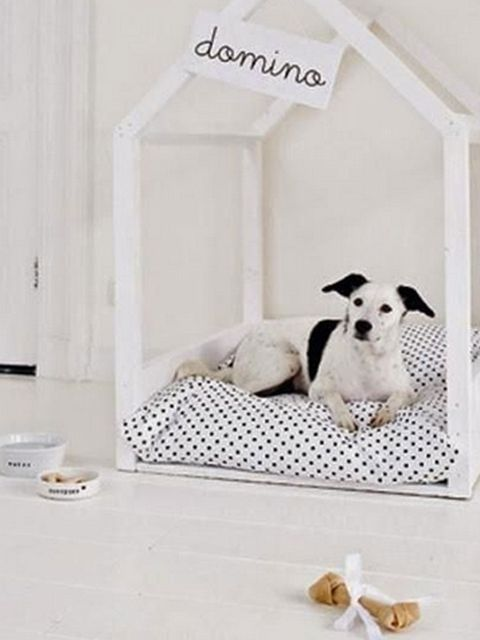 Product, Canidae, Dog, Room, Companion dog, Dog breed, Furniture, Interior design, Dalmatian, Carnivore,