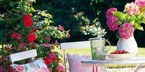Plant, Serveware, Petal, Pink, Flower, Furniture, Lavender, Magenta, Cup, Vase,