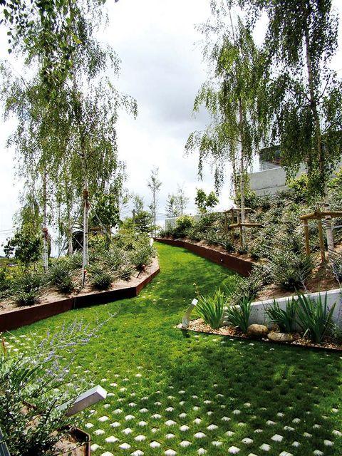 Plant, Shrub, Garden, Botany, Groundcover, Walkway, Yard, Backyard, Lawn, Landscaping,