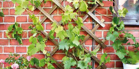Flowerpot, Leaf, Hardwood, Brick, Annual plant, Houseplant, Herb,