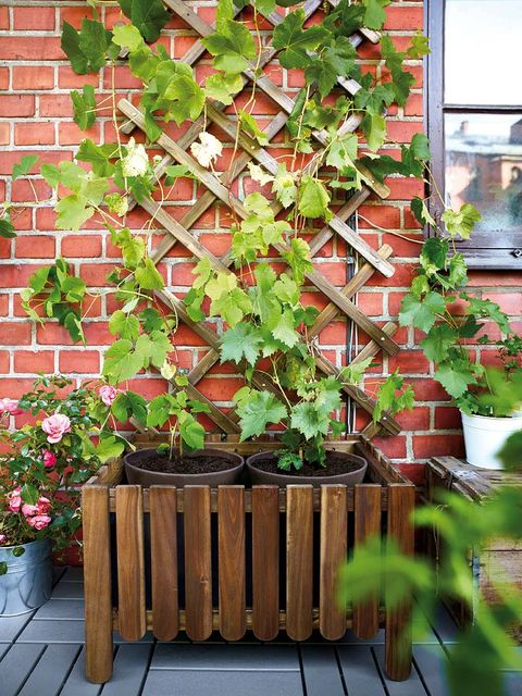 Wood, Leaf, Brick, Hardwood, Flowerpot, Brickwork, Annual plant, Wood stain, Lumber, Ivy family,