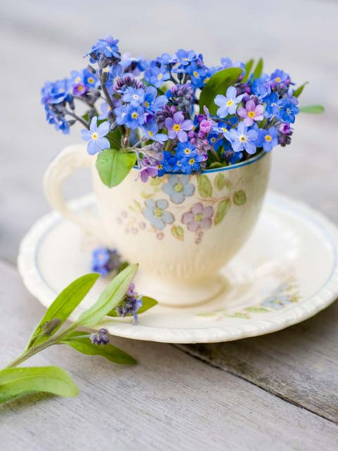 Blue, Flower, Forget-me-not, Plant, Flowering plant, Still life, Borage family, Bouquet, Delphinium, Violet family,