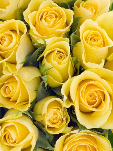 Flower, Rose, Garden roses, Yellow, Floribunda, Rose family, Plant, Cut flowers, Flowering plant, Julia child rose,
