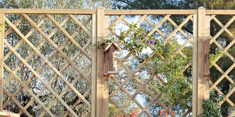 Plant, Iron, Flowerpot, Metal, Garden, Fence, Home fencing, Annual plant, Building material, Gate,