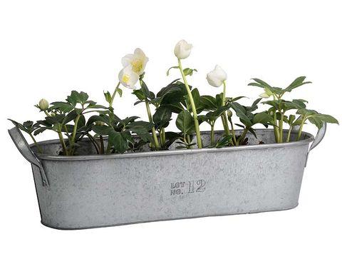 Plant, Flowerpot, Flower, Petal, Botany, Flowering plant, Shrub, Herbaceous plant, Annual plant, Plant stem,