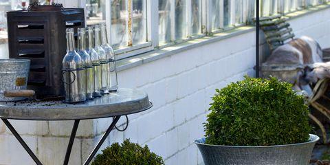 Flowerpot, Interior design, Shrub, Houseplant, Groundcover, Annual plant, Herb, Subshrub,