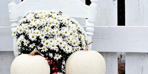 Petal, White, Flower, Flowerpot, Cut flowers, Shrub, Flower Arranging, Floral design, Artificial flower, Annual plant,