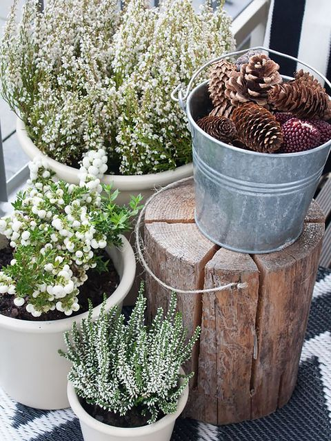 Flowerpot, Plant, Interior design, Houseplant, Shrub, Annual plant, Subshrub, Conifer, Alyssum, Pine family,