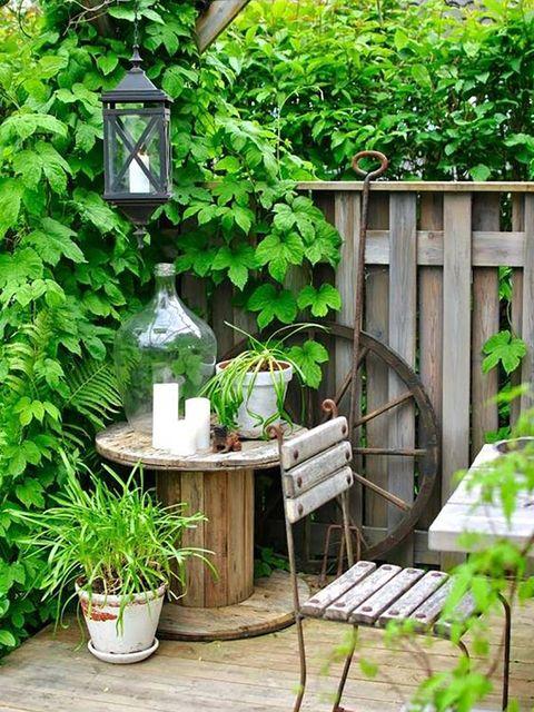 Green, Botany, Plant, House, Leaf, Tree, Backyard, Yard, Garden, Landscaping,