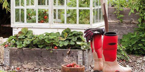 Jardinería de otoño