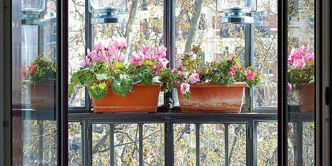 Flowerpot, Plant, Flower, Interior design, Glass, Fixture, Houseplant, Balcony, Annual plant, Vase,