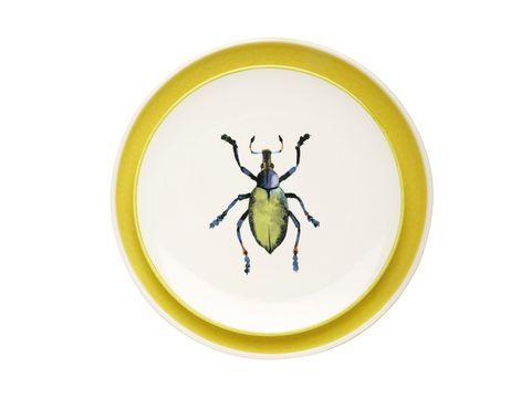 Invertebrate, Insect, Yellow, Arthropod, Pest, Beetle, Parasite, Weevil, Leaf beetle, Bug,