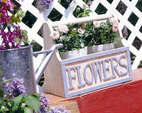 Plant, Flower, Shrub, Purple, Petal, Flowerpot, Lavender, Violet, Garden, Groundcover,