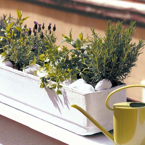 Serveware, Cup, Lavender, Dishware, Drinkware, Interior design, Ingredient, Herb, Flowerpot, Teacup,