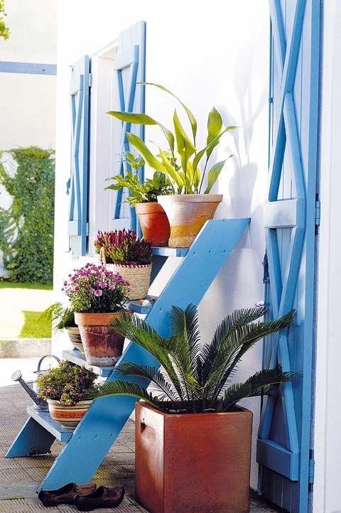 Flowerpot, Plant, Interior design, Houseplant, Majorelle blue, Annual plant, Vase, Thorns, spines, and prickles, Succulent plant, Cactus,