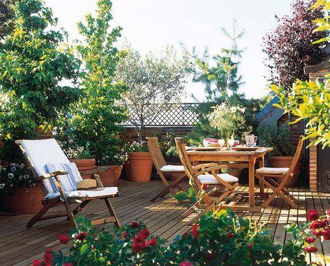 Plant, Furniture, Outdoor furniture, Table, Flowerpot, Outdoor table, Garden, Backyard, Patio, Home,