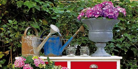 Plant, Petal, Flower, Red, Shrub, Pink, Magenta, Flowerpot, Purple, Flower Arranging,