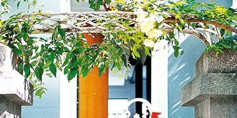 Flowerpot, House, Houseplant, Door, Home door, Paint, Porch, Flower Arranging, Balcony, Floral design,