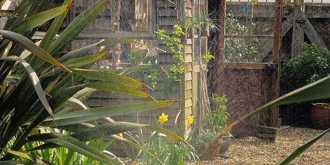 Grass, Garden, Botany, Terrestrial plant, Grass family, Flowering plant, Shrub, Yard, Backyard, Plantation,