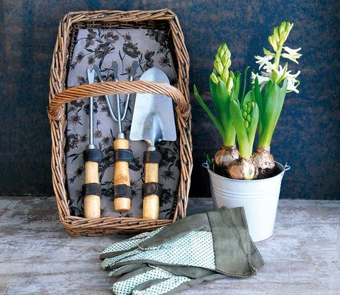 Flowerpot, Terrestrial plant, Flowering plant, Still life photography, Interior design, Basket, Vase, Houseplant, Plant stem, Flower Arranging,