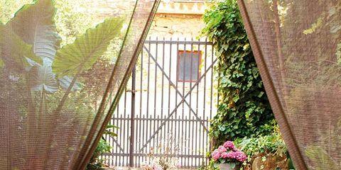 Plant, Flowerpot, Interior design, Flower, Furniture, Table, Interior design, Chair, House, Window treatment,