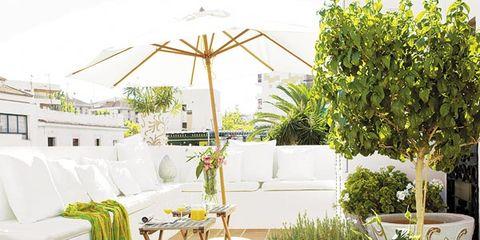 Plant, Flowerpot, Couch, Interior design, Outdoor furniture, Garden, Houseplant, Pillow, Armrest, Coffee table,