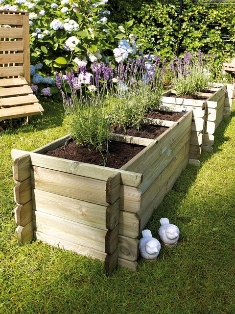 Grass, Plant, Shrub, Plant community, Garden, Flower, Outdoor furniture, Lavender, Groundcover, Bench,