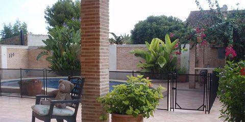 Plant, Flowerpot, Floor, Flooring, Shrub, Hardwood, Outdoor furniture, Garden, Houseplant, Courtyard,