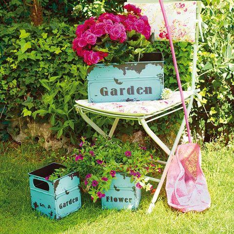 Plant, Shrub, Pink, Flower, Petal, Garden, Magenta, Groundcover, Annual plant, Floral design,