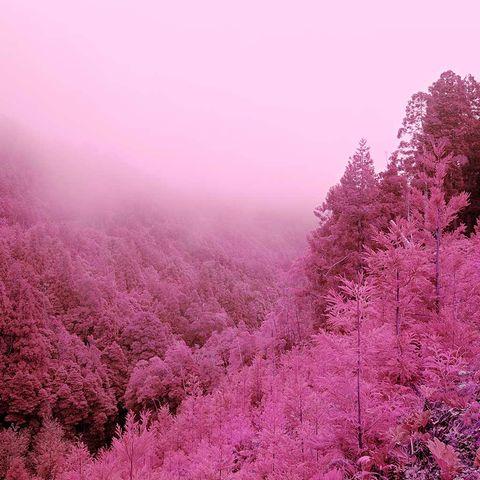 Vegetation, Nature, Purple, Plant community, Magenta, Atmospheric phenomenon, Pink, Natural landscape, Atmosphere, Colorfulness,