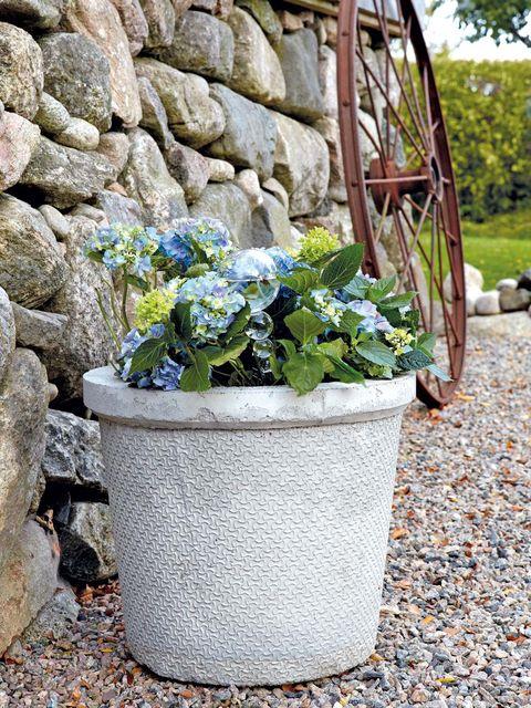 Plant, Flowerpot, Flower, Rock, Pebble, Groundcover, Bedrock, Houseplant, Annual plant, Rubble,