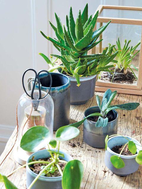 Flowerpot, Plant, Leaf, Interior design, Terrestrial plant, Botany, Houseplant, Succulent plant, Annual plant, Bowl,