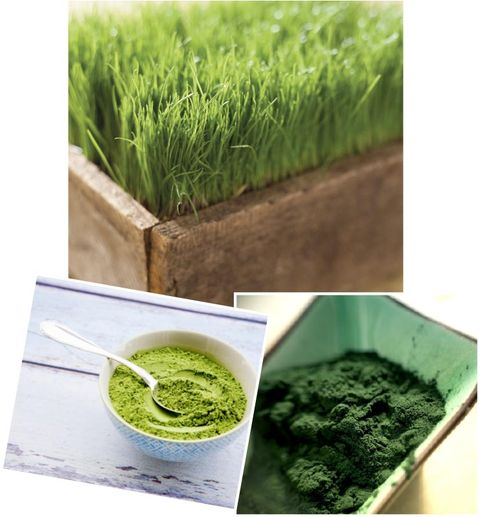 Grass, Green, Wheatgrass, Plant, Grass family, Aonori, Superfood, Food,