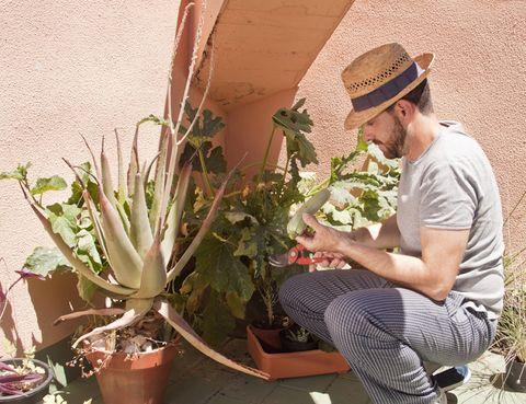 Hat, Plant, Flowerpot, Adaptation, Sun hat, Terrestrial plant, Botany, Succulent plant, Houseplant, Cowboy hat,