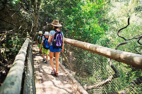 Bridge, Canopy walkway, Nature reserve, Jungle, Tree, Trail, Leisure, Suspension bridge, Rope bridge, Forest,