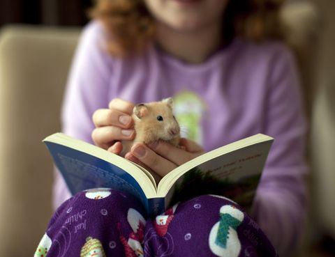 Purple, Reading, Book, Publication, Learning, Sweater,