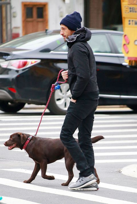 Human, Dog breed, Dog, Carnivore, Road, Leash, Collar, Street, Street fashion, Sporting Group,