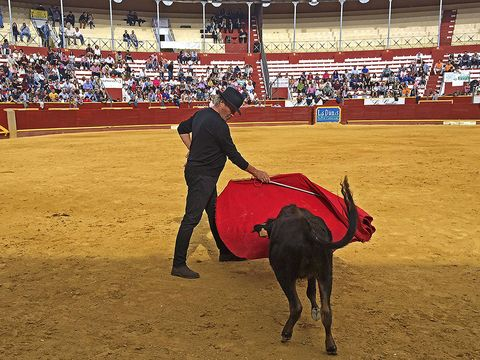 Matador, Human, Bull, Sport venue, Entertainment, Vertebrate, Bullring, Bullfighting, Animal sports, Performing arts,